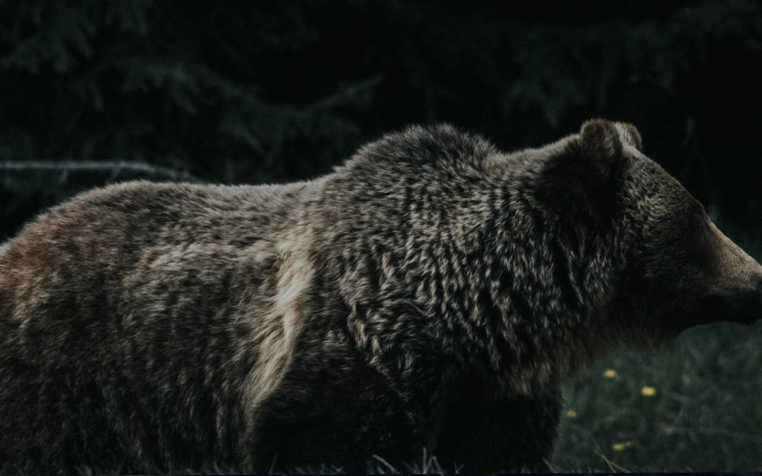 America's Longest Bear Market
