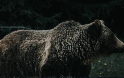 The World's First Bear Market